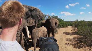 Download Sudafrica, spunta branco di elefanti: ″Ci hanno lasciato in vita e non so perché″ Video