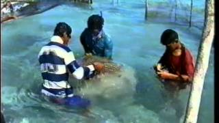Download The return of giant clam - Samoa (TeleFood 1999) Video