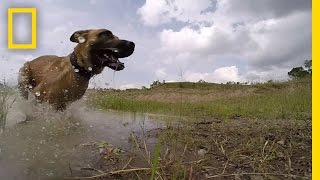 Download Meet the Dog Trained to Take Down Poachers | Short Film Showcase Video
