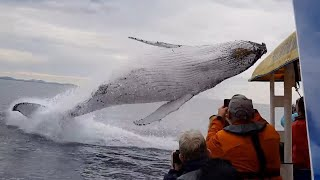 Download Whale jumps out of nowhere during sight seeing tour. Video