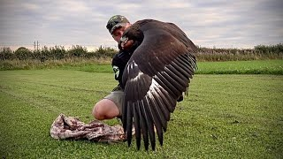 Download Imprinting my female Golden Eagle THE DAKOTA PROJECT Video