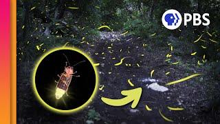 Download Nature's Living Fireworks! Video
