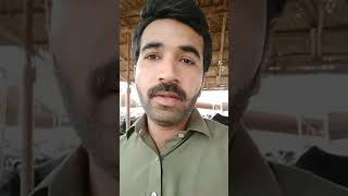 Download Malir Cow mandi visit ijaz Mastoi Video