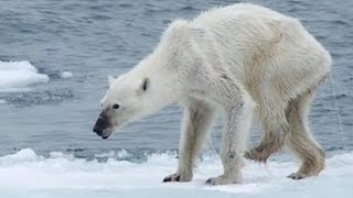 Download Is climate change to blame for this? Video
