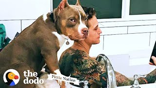 Download Pittie Copies Everything His Parents Do | The Dodo Pittie Nation Video