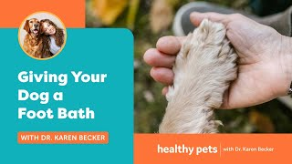 Download Giving Your Dog a Foot Bath Video