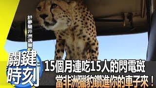 Download 15個月連吃15人的閃電斑 當非洲獵豹鑽進你的車子來! 2013年 第1684集 2300 關鍵時刻 Video