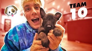 Download I ACTUALLY BOUGHT A PUPPY **not clickbait** Video