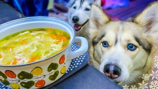 Download CHICKEN SOUP FOR DOGS DIY How to make Chicken Soup for Dogs | Snow Dogs Snacks 43 Video
