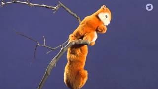 Download Die Sendung mit der Maus: Eichhörnchen Video