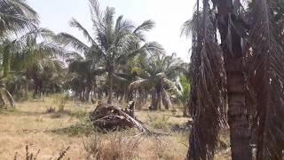 Download Farm Land Sale In Nedungulam, Nanguneri Taluk Video