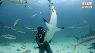 Download Shark Tonic Immobility | JONATHAN BIRD'S BLUE WORLD Video