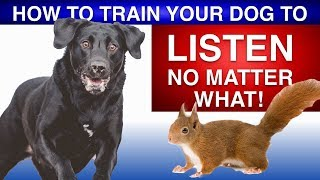Download How To Train Your Dog To Listen No Matter What! Video