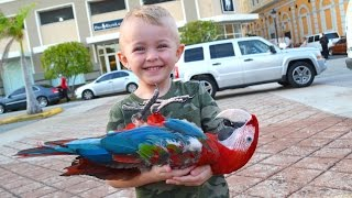 Download BOY FINDS DEAD BIRD!! Video