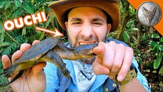Download Snapping Turtle BITES Me.. AGAIN! Video