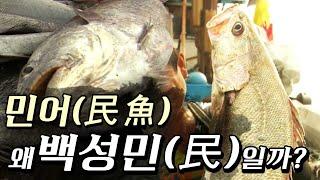 Download [특집다큐]민어(民魚), 왜 백성민(民)일까?(2010년,목포MBC) Video