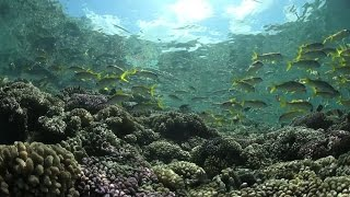 Download Ocean Conference – first step for governments to commit to save oceans by 2030 Video