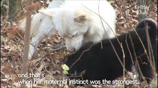 Download Dog Hides Her Puppy From Fear of Adoption | SBS Animal Video