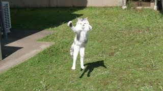 Download 疾風の如く駆け回る三毛猫姉さん。夏のお庭は虫がいっぱいにゃ! Video