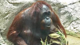 Download Los Angeles Zoo 2010 Video