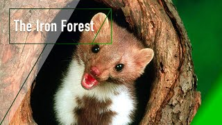 Download The Iron Forest - The Secrets of Nature Video