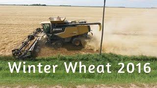 Download Winter Wheat 2016 canada Video