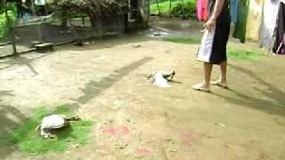 Download Matando Patos pa' Comerlos Video