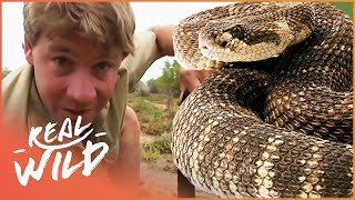 Download The Fifth Deadliest Snake In The World | With Steve Irwin | Wild Things Shorts Video