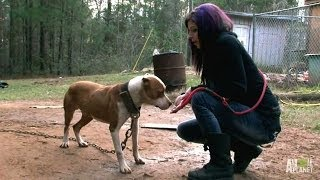 Download Tania Leads the Rescue to Save Ten Dogs | Pit Bulls and Parolees Video