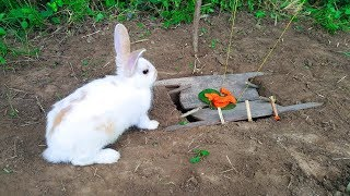 Download The First Rabbit Trap With Deep Hole by Smart Boy - How To Trap Rabbit That Works 100% Video