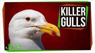 Download Killer Gulls Rip Into Whales and Murder Seal Pups Video