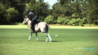 Download The Sport of Horse Polo: History and Tips Video