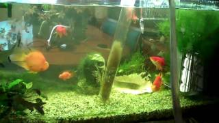 Download fish tank water change (aquarium) fish care: Part 1 Video