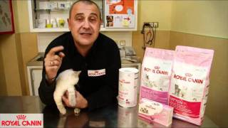 Download Cómo evitar el celo en las gatas - Consejos felinos Royal Canin Video