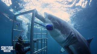 Download The Boldest Bites | Shark Week's Most Intense Encounters Video