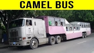 Download 5 Most Insane Transport Methods From Around The World! Video