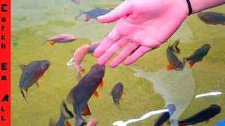 Download 1,000 PACU FISH BABIES!!! Video