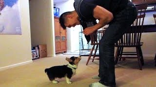 Download TRAINING MY CORGI PUPPY - Life After College: Ep. 338 Video