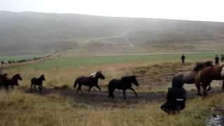 Download Laufskálaréttir 2009 Video