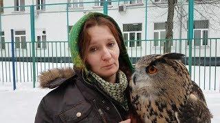 Download Не гладь сову! Это плохо! Совы не любят, когда их трогают. Video