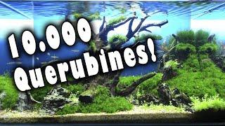 Download 10.000 Acuarios de Querubines Especial yieep! Video