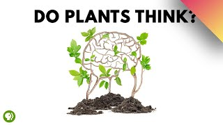 Download Do Plants Think? Video