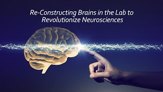 Download Re-constructing Brains in the Lab to Revolutionize Neuroscience Video