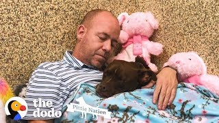 Download Guy Moves Into Animal Shelter Because He Loves This Pittie So Much | The Dodo Pittie Nation Video