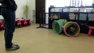 Download 犬の幼稚園 シナモンくんとトレーニング Video