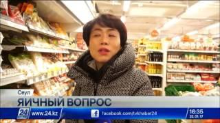 Download В Южной Корее уничтожили 31 млн кур и уток из-за птичьего гриппа Video