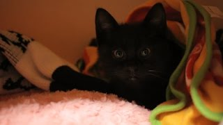 Download 猫家に入ると出てこない黒子猫のクロ Kuro black kitten that does not come out to fall to the cat house【瀬戸の黒猫日記】 Video