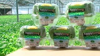 Download San Diego Hydroponic Farm Video
