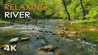 Download 4K Relaxing River - Ultra HD Nature Video - Water Stream & Birdsong Sounds - Sleep/Study/Meditate Video