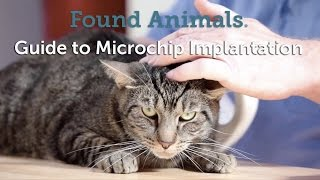 Download Guide to Microchip Implantation Video
